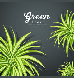 pandanus tree green leaves background vector image