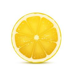 realistic of lemon slice vector image
