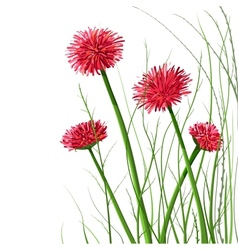 Beautiful Wild Flowers vector image