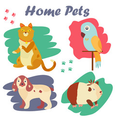 Bright images of domestic animals cat parrot dog vector