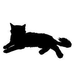 Cute fluffy cat lays of black vector