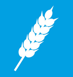 dried wheat ear icon white vector image