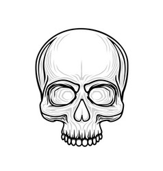 human skull isolated on black color object vector image