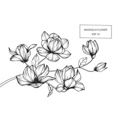 Magnolia flower drawing vector