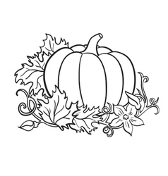 pumpkin drawing isolated outline vegetable vector image