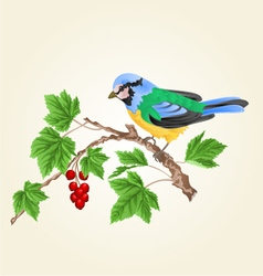 Titmouse bird on a branch currant vector