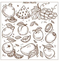 fruits sketch icons farm fresh exotic vector image vector image