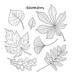 set of black and white autumn falling leaves vector image