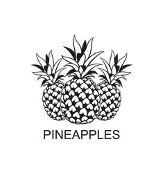 image of pineapple fruits vector image