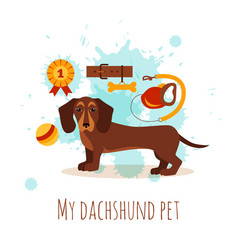 Dachshund care infographic concept with dog vector