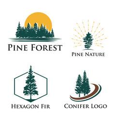 Pine fir conifer tree camping adventure nature vector