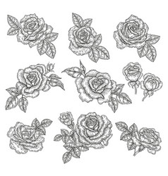 rose flowers and leaves in vintage style hand vector image