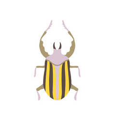 Striped beetle insect bug top view flat vector
