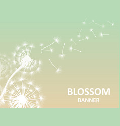 Blossom banner background with dandelion white vector