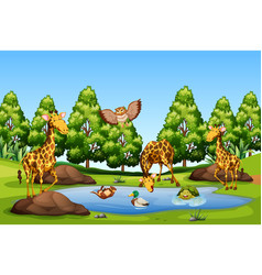 many animal at the pond vector image