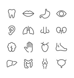 set simple icons anatomy and organ vector image