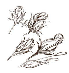 hand drawn set of rose buds outline on white vector image