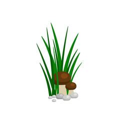 Bush of green grass with mushroom vector