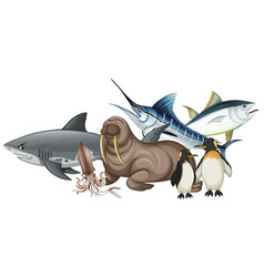 different types of sea animals on white vector image