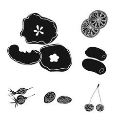 design of vitamin and nature symbol set of vector image