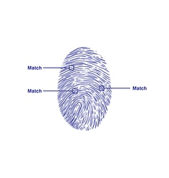 Fingerprint match vector