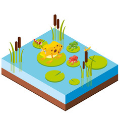 Frogs and dragonflies in 3d design vector
