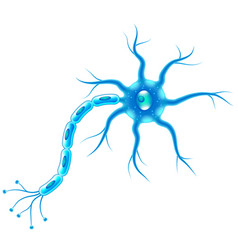 nerve cells isolated on white vector image