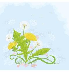 flowers dandelions vector image