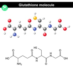 Glutathione chemical molecule vector image