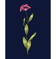 Plants and herbs background Isolated flower vector