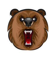 russian angry bear vector image