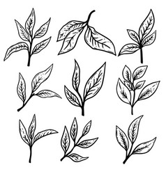 set hand drawn tea leaves design element for vector image