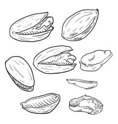 set sketch pistachios vector image