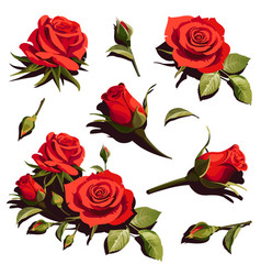 with red roses on white background vector image