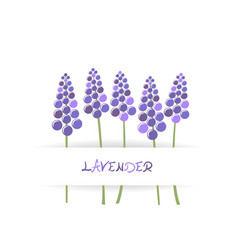 card with stylized lavender vector image vector image
