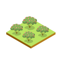 Apple trees isometric 3d icon vector