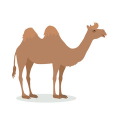 bactrian camel cartoon icon in flat design vector image vector image