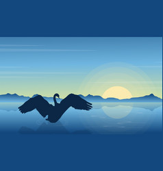 Silhouette of swan in the lake at sunrise vector