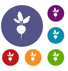 fresh radish icons set vector image vector image
