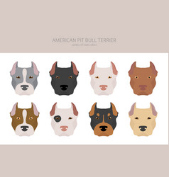 American pit bull terrier dogs set color vector
