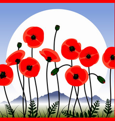 poppy flowers image vector image
