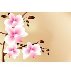White orchids with pink spots flowers and buds vector image