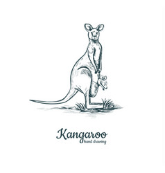 kangaroo with baby kangaroo baby vector image