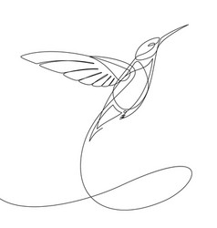 humming bird continuous line vector image