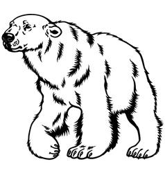 Polar bear black white vector