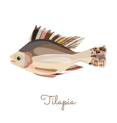 Single tilapia in flat style isolated on white vector