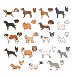 dog breeds side view and muzzle set collection vector image vector image