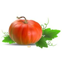 Orange Pumpkin with leaves vector image vector image