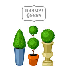 boxwood topiary garden plants decorative trees in vector image
