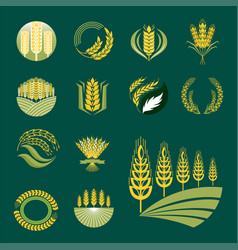 Cereal ears and grains agriculture industry or vector